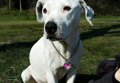 ARIEL: Cane con tumore al cuore dopo 1 anno di terapia