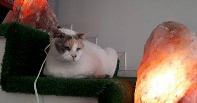 Tina: Una gatta salvata da morte certa