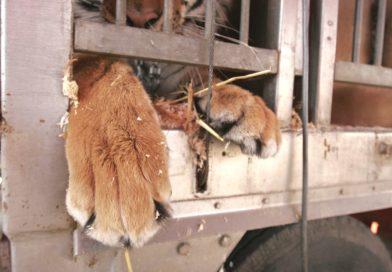 Senza animali il circo è uno spettacolo più umano