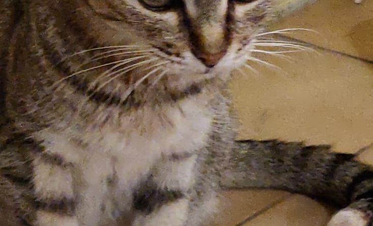 NICOLE: il gatto con Stomatite