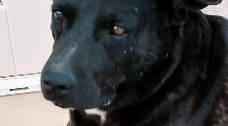 MOCHI: adenoma rettale in via di guarigione